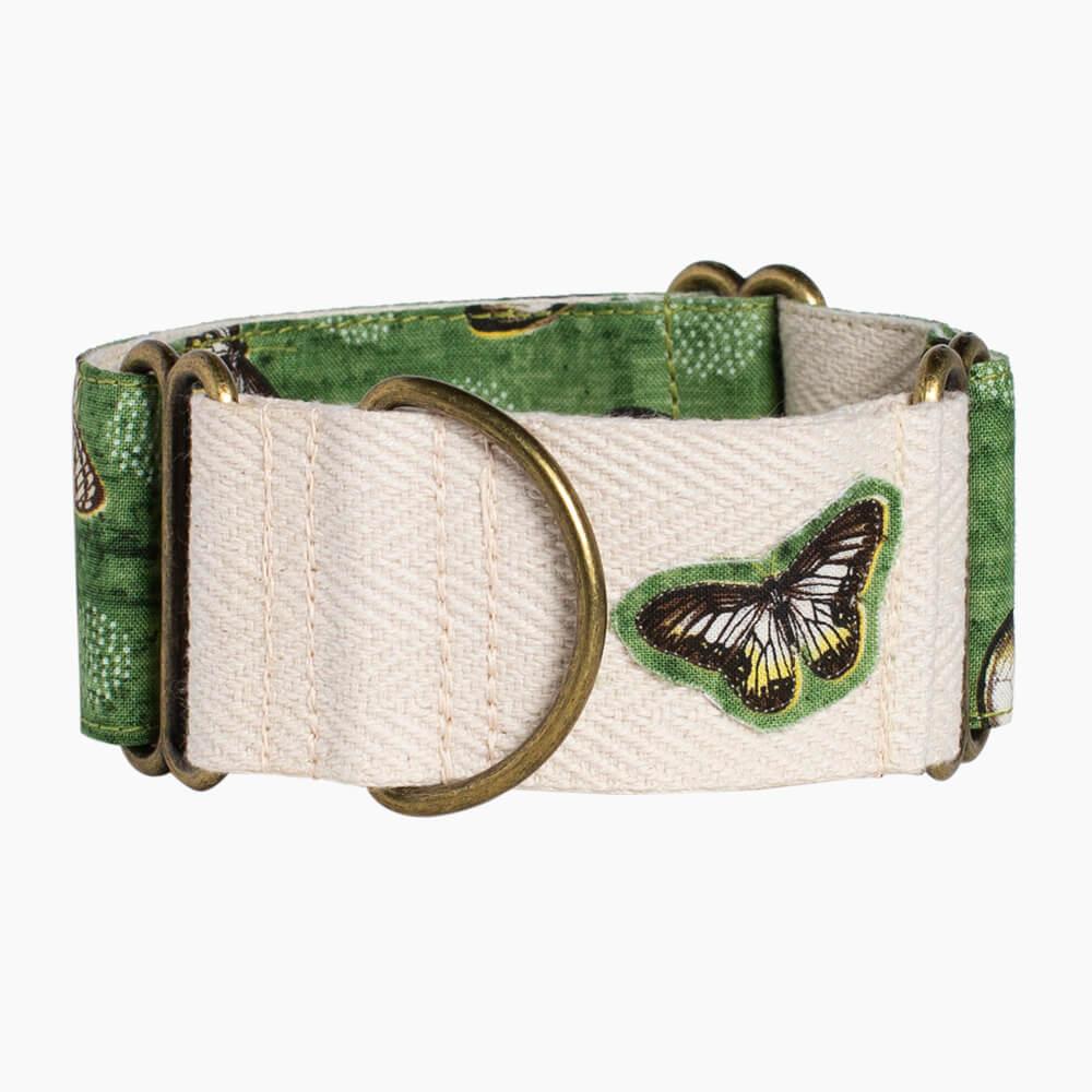 collar para perro Monarch