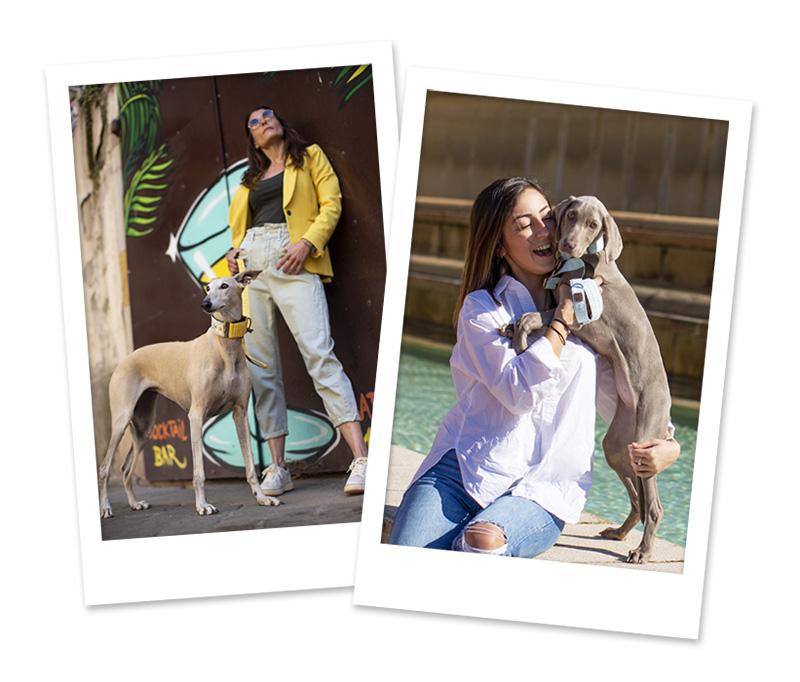 fotógrafo de perros